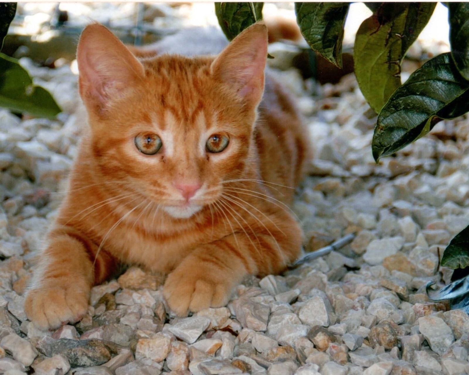 gatto agriturismo